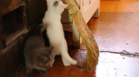 evcil hayvanlar : cute  kittens playing indoor
