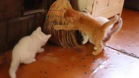 adorable : cute kittens playing indoor, Full HD