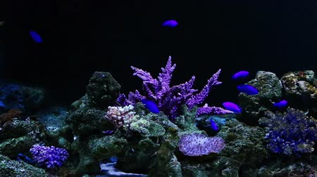 Corals and exotic marine fish. Ocean life. The oceanarium. Scene under water. Large aquarium. Wild nature. Tropical inhabitants