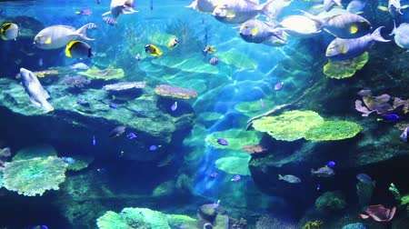 Corals and exotic marine fish. Ocean life. The Bangkok oceanarium. Scene under water. Large aquarium. Wild nature. Tropical inhabitants