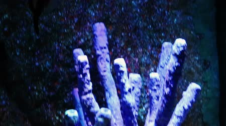 Corals and exotic marine fish. Ocean life. The Oceanarium of bangkok. Scene under water. Large aquarium. Wild nature. Tropical inhabitants batfish