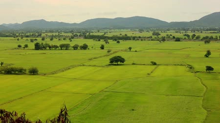 Landscape of a beautiful green rice paddy field and mountains. Kanchanaburi Province, Thailand. Dostupné videozáznamy