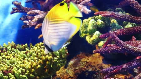 Corals and exotic marine fish. Ocean life. The Oceanarium of bangkok. Scene under water. Large aquarium. Wild nature. Tropical inhabitants