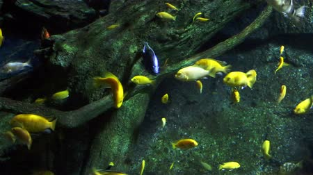 Corals and exotic marine fish. Ocean life. Scene under water. Wild nature. Tropical inhabitants