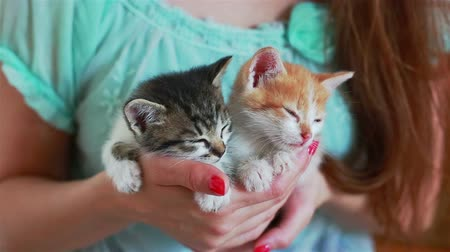 Close up of two cute kittens in womans hands. Pretty woman holding a cats closely to the camera. Indoor. Adorable kitty Wideo