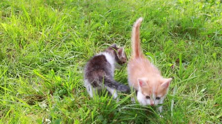 Two small cats in the grass. Cute kitten playing in the garden Dostupné videozáznamy