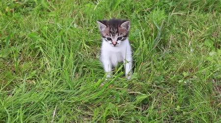 Two small cats in the grass. Cute kitten playing in the garden Wideo