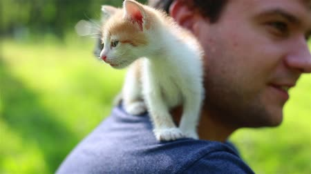 sorriso largo : Cute Kitty Sitting on Young Man Shoulder. Adorable kitten outdoors for the first time. Playful pet loves his owner