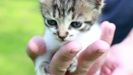 animal welfare : Young man is holding a small kitten in his hands. Adorable kitty outdoors for the first time. Cute pet closeup