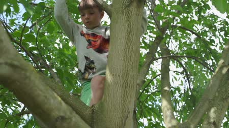 полосатый : child 7 years climbing a tree in the summer