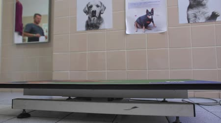 bakıyorum : Put the dog on the table in the veterinary clinic