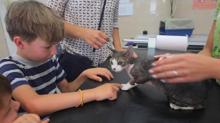 A boy strokes a cat in a veterinary clinic, the hands of a doctor, the hands of the proprietress, tenderness