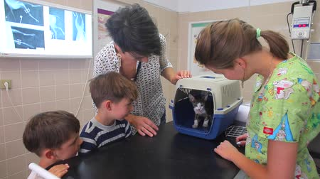 klatka : The owners of the cat (a woman and two boys 4-7 years old) lure the devon rex cat out of the cage in a veterinary clinic