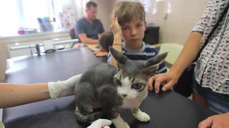 A cat on examination on the black table in a vet clinic. Hands in white gloves. Boys 4-8 years old are owners of the kitten, they stand. The doctor is sitting in the background.