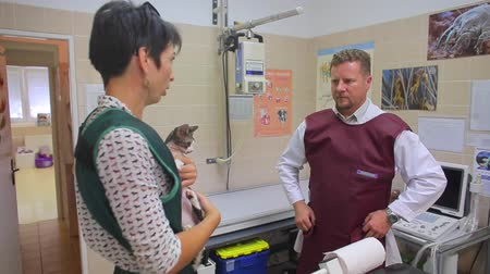 man and woman in defense are starting to do x-ray Devon Rex in a veterinary clinic Dostupné videozáznamy