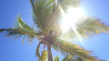 coconut palm tree : Coconut palm tree in sunny day