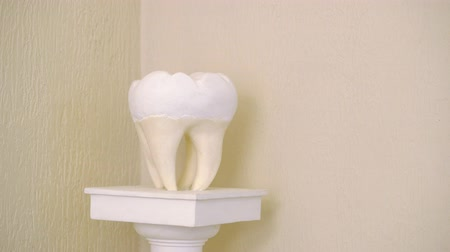 Sculpture of tooth in dental clinic