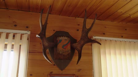 trofej : horns of a deer on a wooden wall in countryside house
