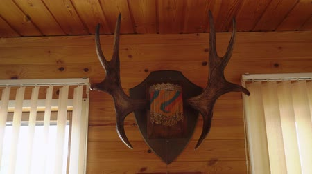 deer : horns of a deer on a wooden wall in countryside house