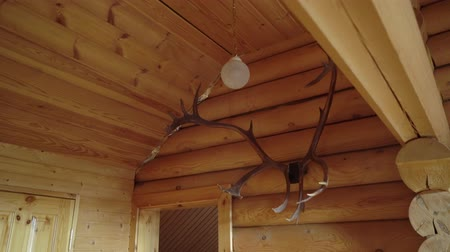 přežvýkavec : horns of a deer on a wooden wall in countryside house