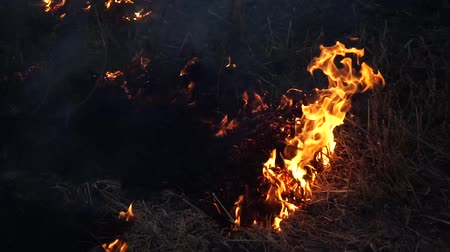 destruir : Burning dry grass in autumn field close-up