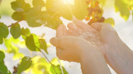 çevre koruma : Water pouring in female hands on nature background, ecology concept Stok Video