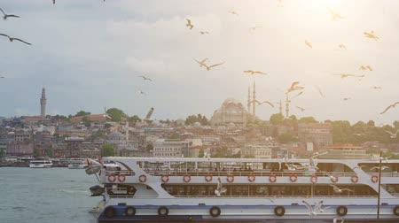 glide : Istanbul, Bosporus, Turkey. Seagulls flying over the sea, against the backdrop of the old city Stock Footage