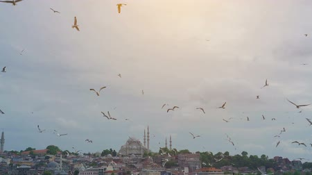 freedom tower : Seagulls flying over the sea, against the backdrop of the Istanbul, Turkey.