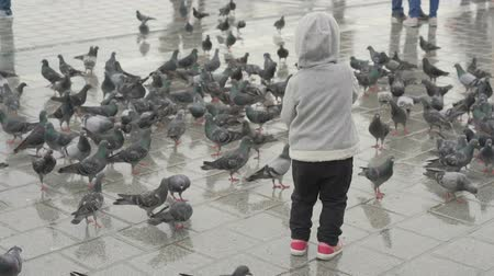 hejno : child feeding pigeons, baby feeding birds on city square Dostupné videozáznamy