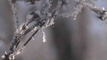 мороз : Winter morning frost krudat snowflakes Стоковые видеозаписи
