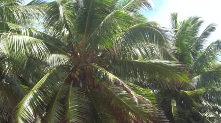Острова : Palm trees against the sky or sea 5 Стоковые видеозаписи