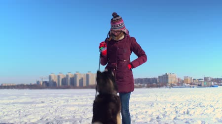 lojális : Attractive young woman playing with her Husky dog on frozen river against background of cityscape Stock mozgókép