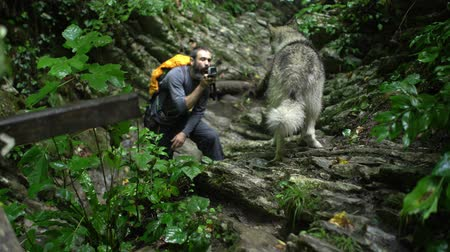 新芽 : Blogger traveler shoots his dogs video by action camera in green forest at the mountains