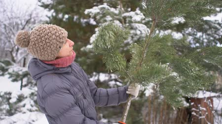 piŁa : Attractive woman holding and choosing a pine branch in her winter snowy garden for Merry Christmas and Happy New Year Wideo
