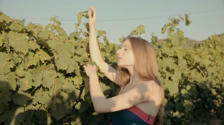 giydirmek : Charming slim girl in a strapless dress walks along the vineyards Stok Video