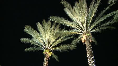 ostrovy : Palm Trees at Night