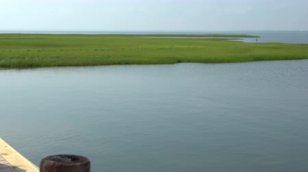 istiridye : A view of the dock and marsh near Ho Hum beach on Fire Island on a gorgeous sunny day Stok Video