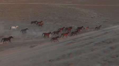 fardo : Herd of horses in the Mongolian steppe (Aerial view) Vídeos