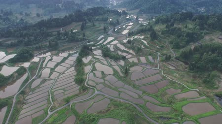 cultivation : Aerial view of rice terraces of japan (Yamaguchi Prefecture) Stock Footage