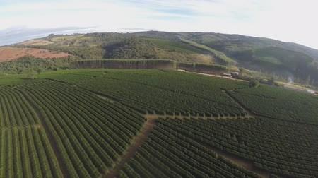 minas gerais : coffee plantations in Brazil (drone footage) Stock Footage
