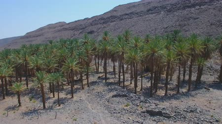 aerial view of palm trees in the desert mountainous terrain of Algeria