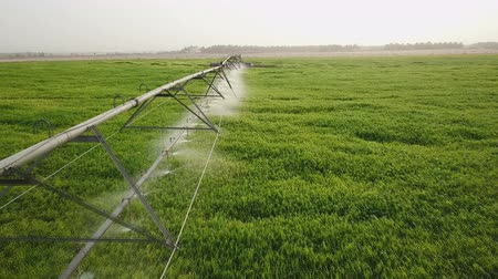 spil : green field, irrigation system on the field. Stockvideo