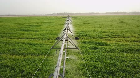 green field, irrigation system on the field. Стоковые видеозаписи