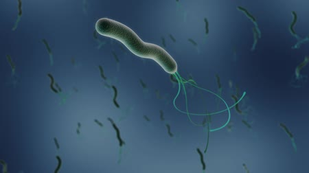 tudományos : some helicobacter pylori bacteria under the microscope 3d render