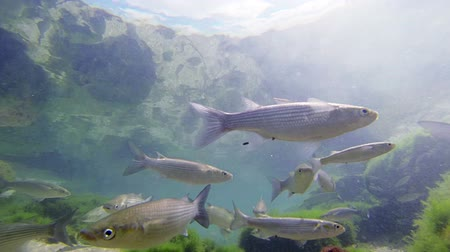 underwater landscape : School of fish swiming in shallow water