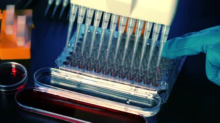 tray : Use multi pipette in microbiology Stock Footage