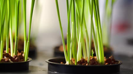 organic : Plants in a hydroponic setting Stock Footage