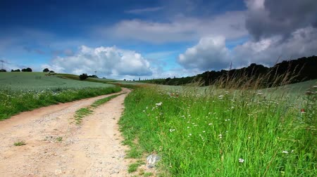 toprak : Summer meadow with green grass and dirt road Stok Video