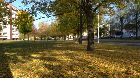 Yellow trees in autumn park