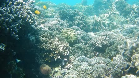 waterline : underwater smooth motion in snorcheling in coral reef Stock Footage